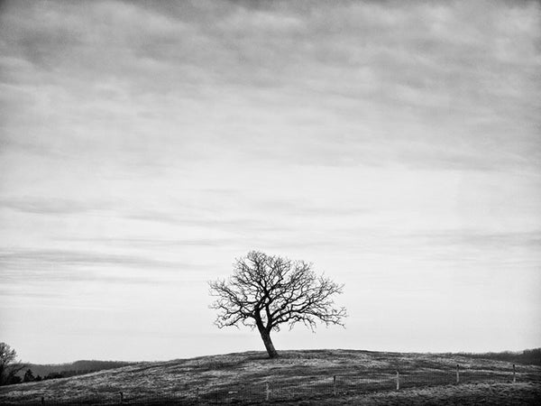 Black and white winter landscape photograph of a single tree on barren hill top.