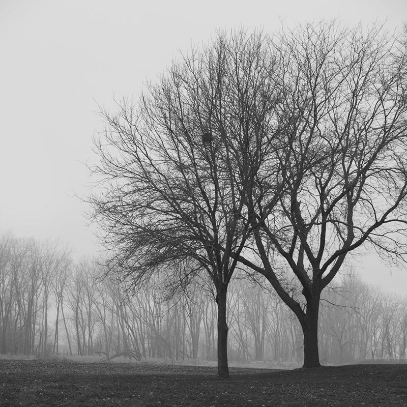 Black and white photograph of two trees on a foggy, dreary morning.