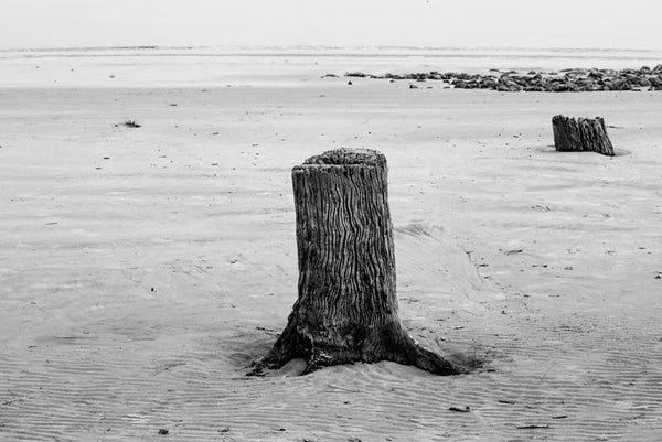 Black and white photograph two weathered tree stumps in the sand at Driftwood Beach on Jekyll Island, Georgia.