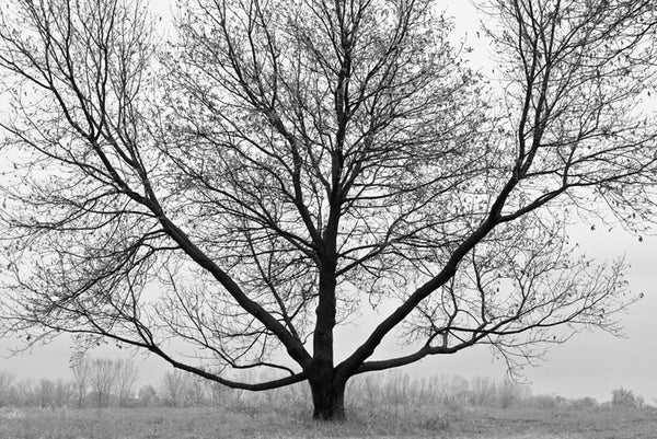 Symmatree, a black and white landscape photograph featuring a tree with outspread branches.