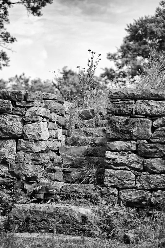 Black and white photograph of thistles growing atop the old limestone walls of Fort Negley near Nashville. Fort Negley is a star-shaped structure built of limestone blocks on a hilltop south of the city, and was the largest inland fort built during the American Civil War. The fort was built by the Union army in 1862 as a defensive post after the Confederates lost control of Nashville in successive battles, but with fighting concentrated in other areas, the fort never saw action.