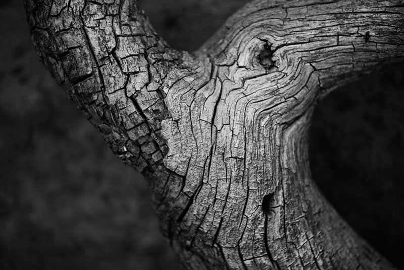 Black and white fine art photograph of a beautifully textured tree found along the hiking trail at Mesa Verde, Colorado.