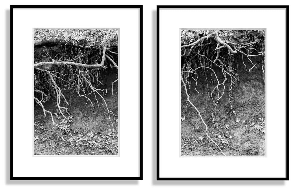 Set of two black and white landscape photographs of tree roots dangling from an eroded river bank. Perfect to be framed and displayed side-by-side.
