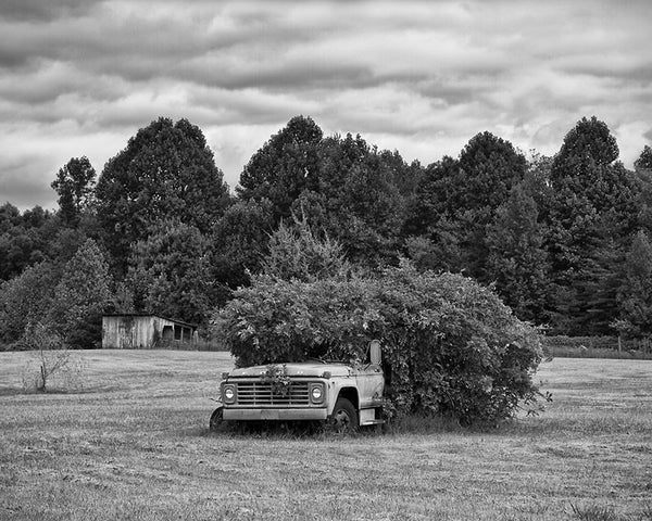 Black and white landscape photograph of an old Ford truck abandoned in a field, and overgrown with bushes.