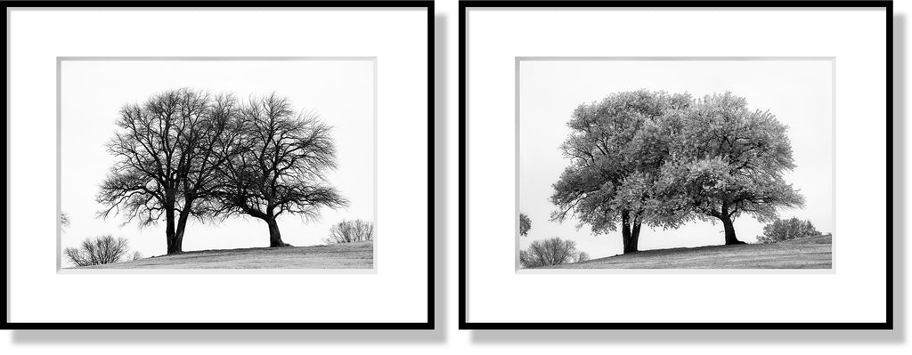 Matching set of two photographs of trees in winter and in summer. Frames and mats are for illustration purposes only. Sold without frames and mats.