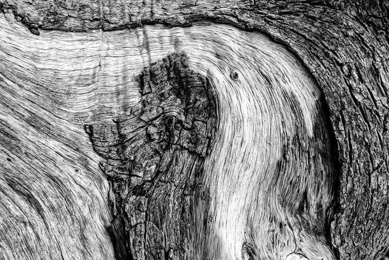 Black and white photograph of the woodgrain and bark texture of a fallen tree on Driftwood Beach at Jekyll Island.
