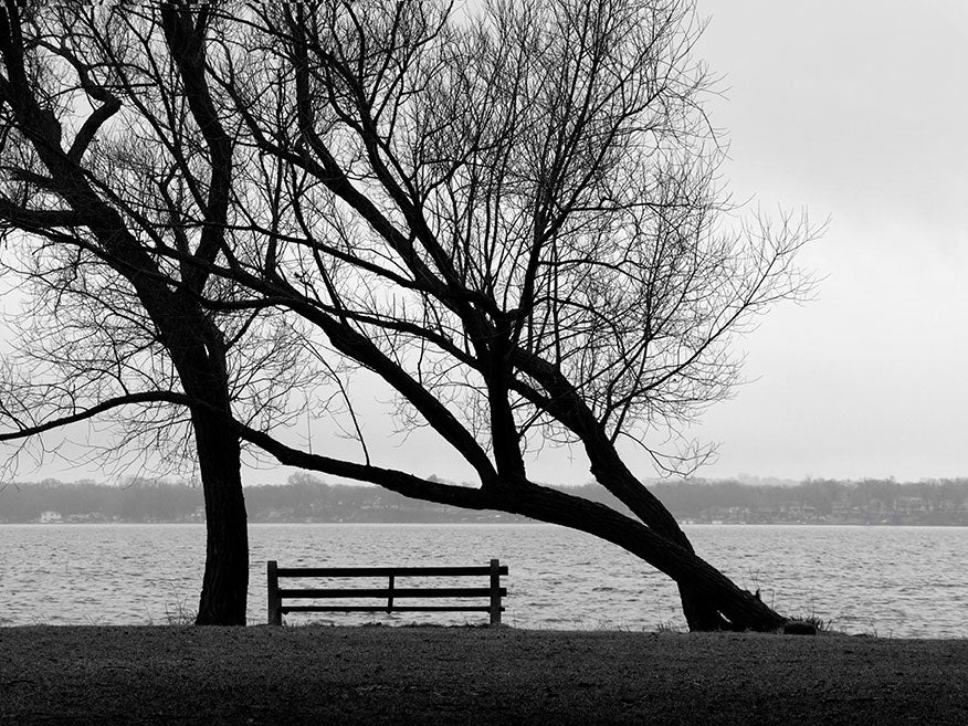 Black and white landscape photograph of two trees and an empty park bench on the shore of a beautiful lake. I call this image yearning because the leaning tree seems to personify such a longing, as it reaches across the empty park bench to the other tree. Who among us hasn't felt this kind of longing in our lives? Photographed at Lake Monona in Madison, Wisconsin.