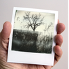 Bleak Tree: Original Polaroid Landscape Photograph Matted to 11 x 14
