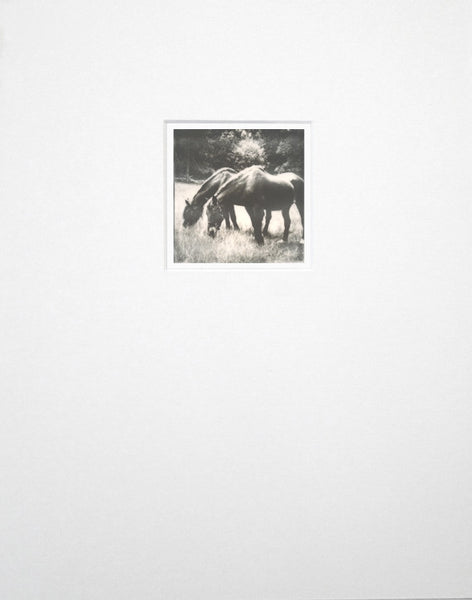Original polaroid photograph of grazing horses by Keith Dotson, matted to fit an 11 x 14 inch frame