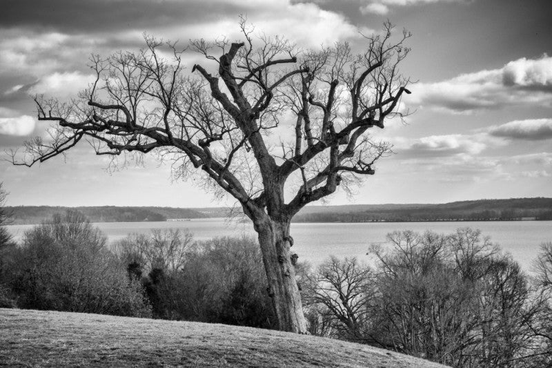 Black and white landscape photograph of the view of the Potomac River from George Washington's house at Mt. Vernon, Virginia. The view is still relatively unchanged from what Washington would have seen from his back porch.