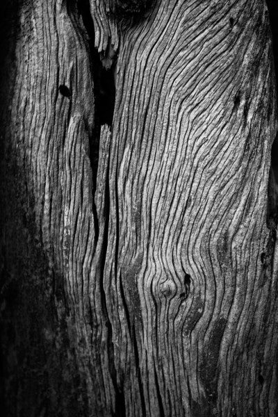 Black and white detailed photograph of a weathered desert tree texture.