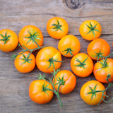 Goldilox RARE Dwarf Orange Organic Tomato