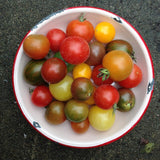 Tomato Lovers Surprise Seed Set — Container Varieties