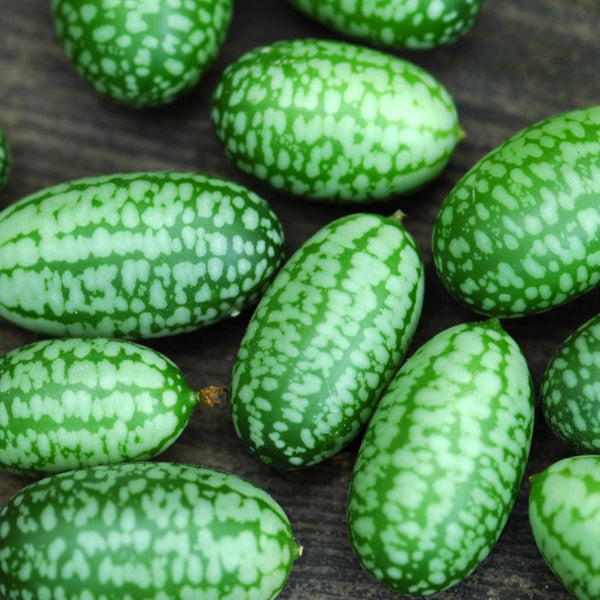 Mexican Sour Gherkin Seeds - Super Easy to Grow