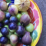 Gayla's Purple Tomatillo — Delicious Mexican Husk Tomato
