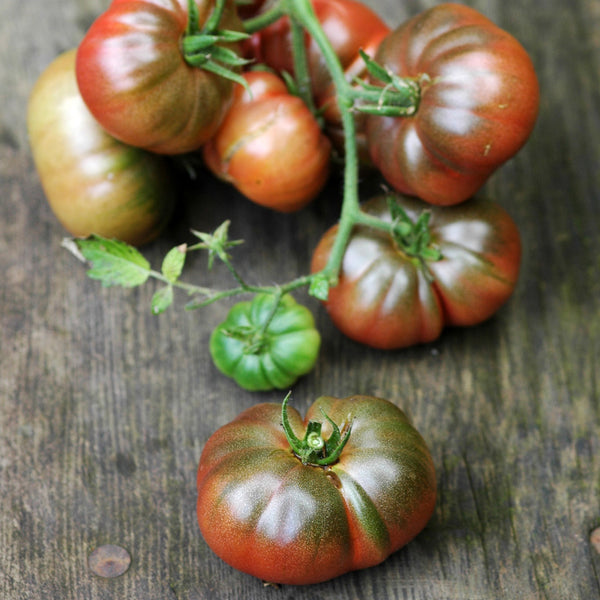 Purple Calabash Tomato Seeds — Unusual Flavour