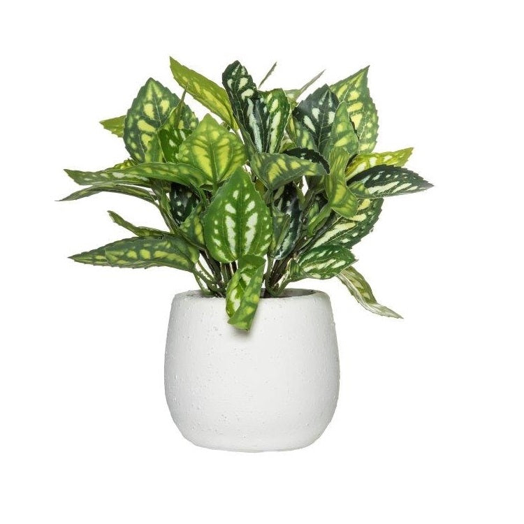 Artificial Faux Peperomia Bush in Pot