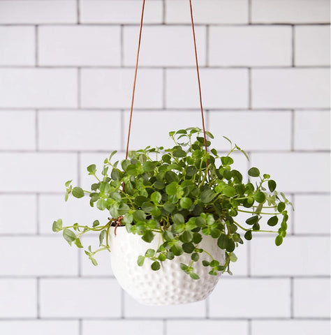 Burgon & Ball Ceramic Hanging Pot - Dot