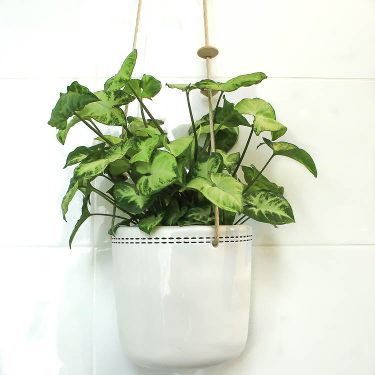 Ceramic Hanging Pot - Mode