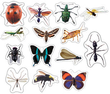 Insects: Photographic Realistic Stickers