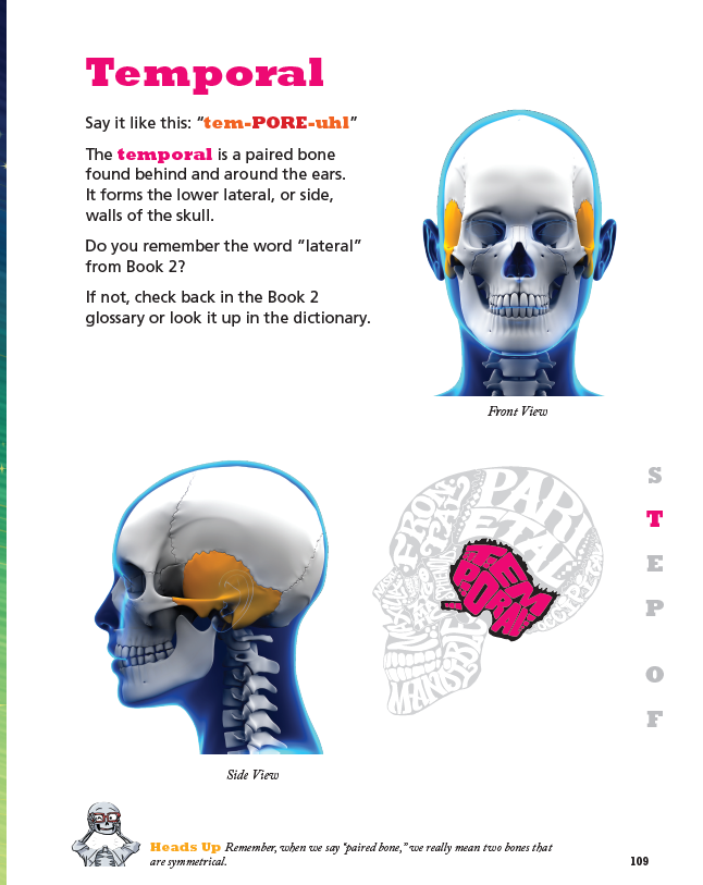 Dr. Bonyfide Presents Bones of the Head, Face, and Neck