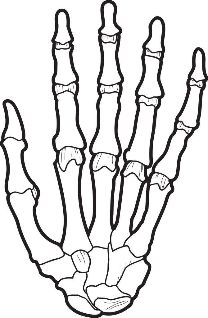 photo about Printable X Rays identified as Absolutely free Printable X-Ray Coloring Website page for Little ones SupplyMe