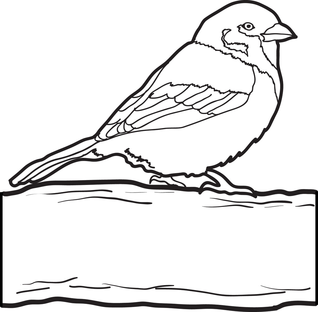 Free Printable Sparrow Coloring Page For Kids Supplyme