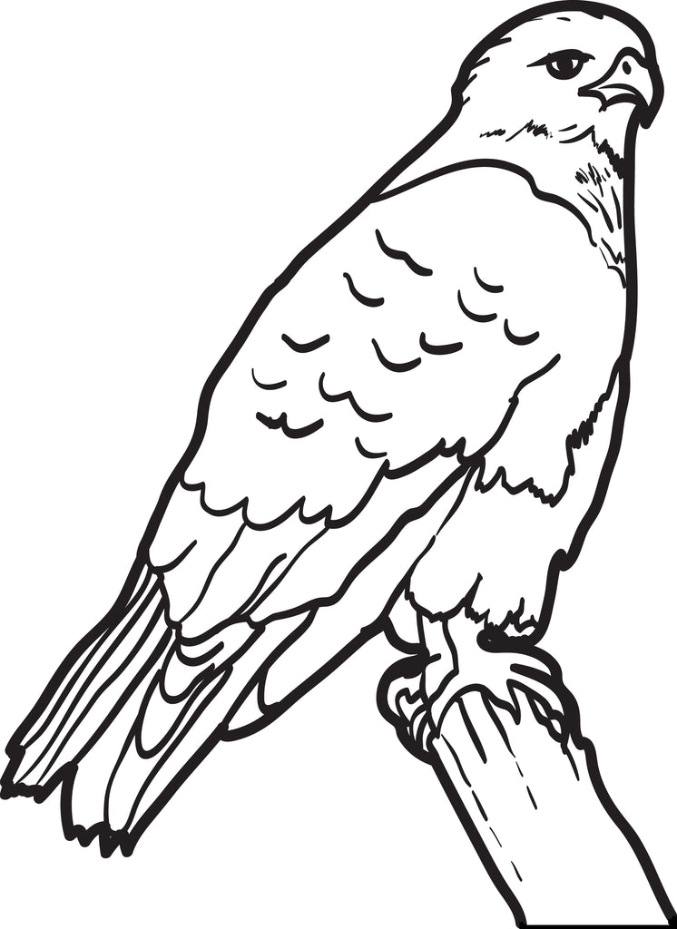 FREE Printable Hawk Coloring Page