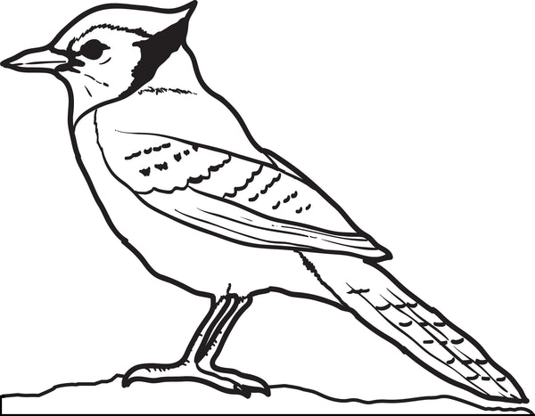 Printable Blue Jay Coloring Page for Kids