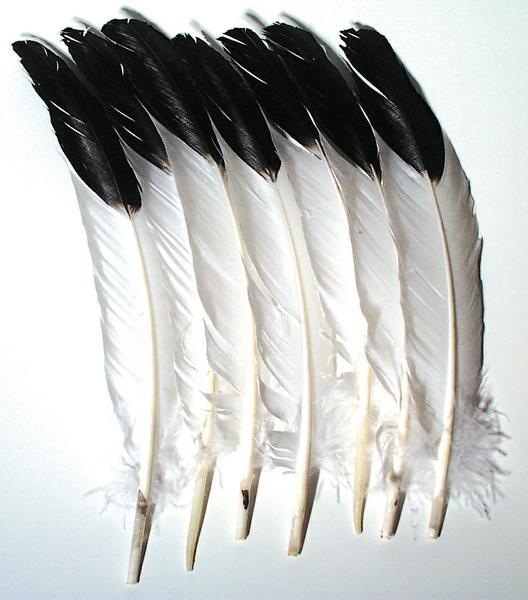 Imitation Eagle Quill Feathers - 12 Pieces