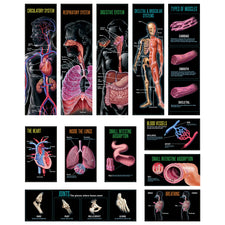 Human Body Mini Bulletin Board Set