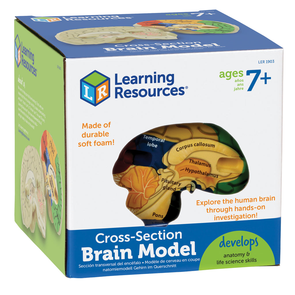 Learning Resources Cross-Section Human Brain Model