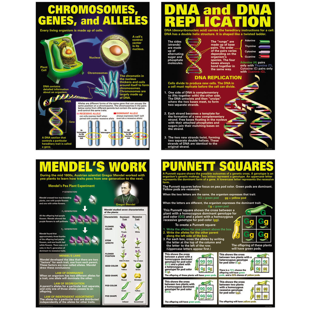 McDonald Publishing DNA & Heredity Poster Set