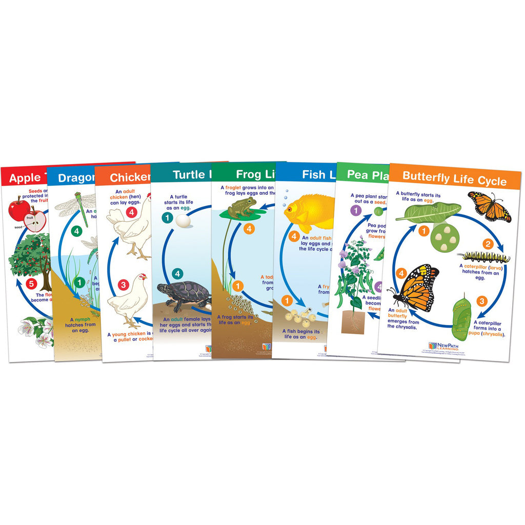 New Path Learning Life Cycles Bulletin Board Chart Set
