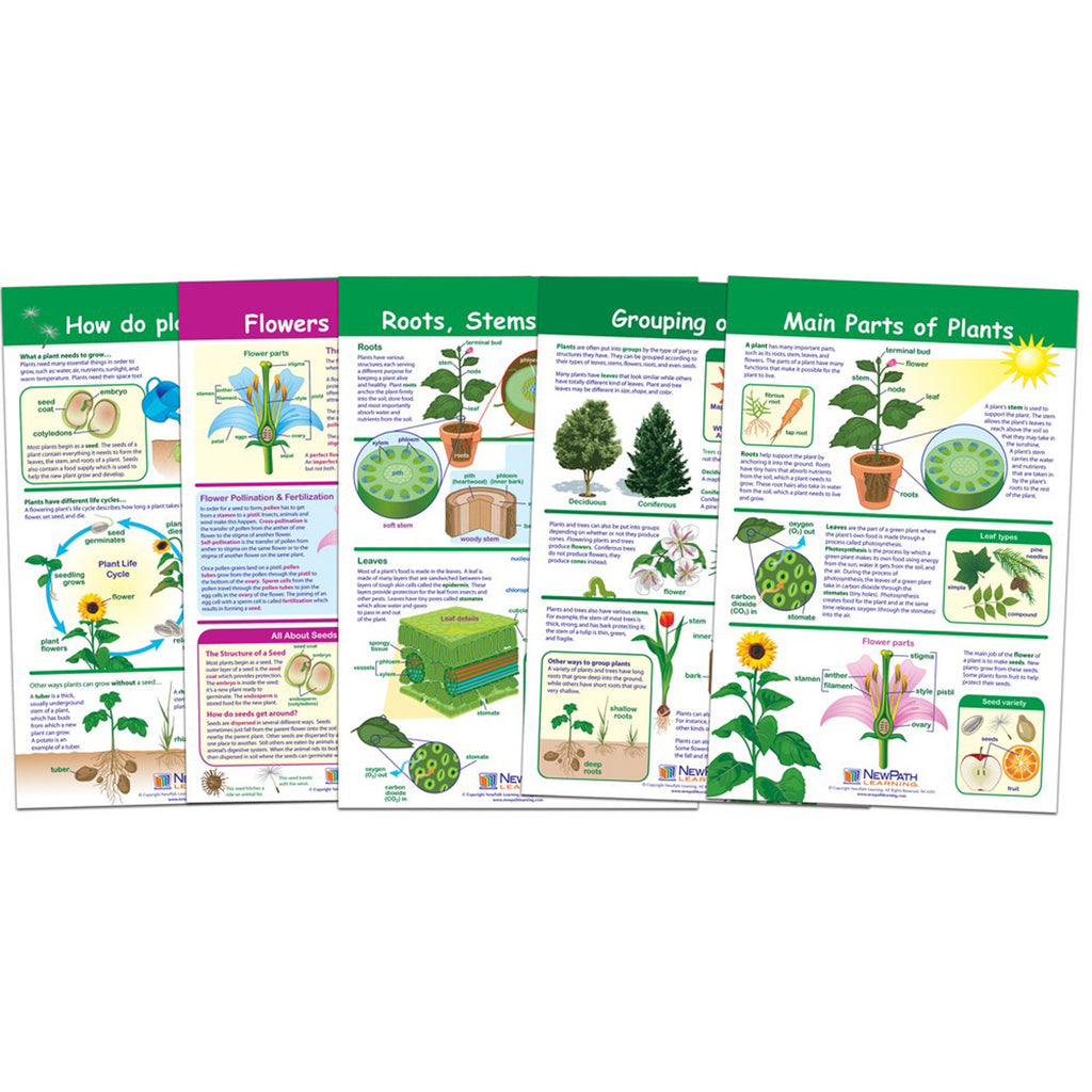 New Path Learning All About Plants Bulletin Board Chart Set