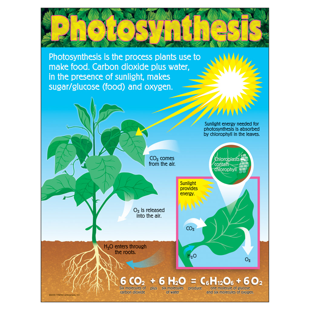 Trend Enterprises Photosynthesis Learning Chart