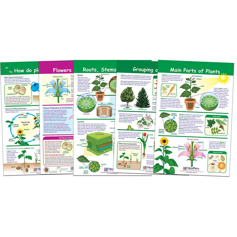All About Plants Bulletin Board Chart Set