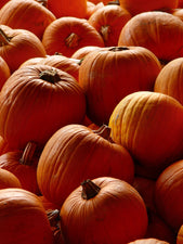The Science of Pumpkins