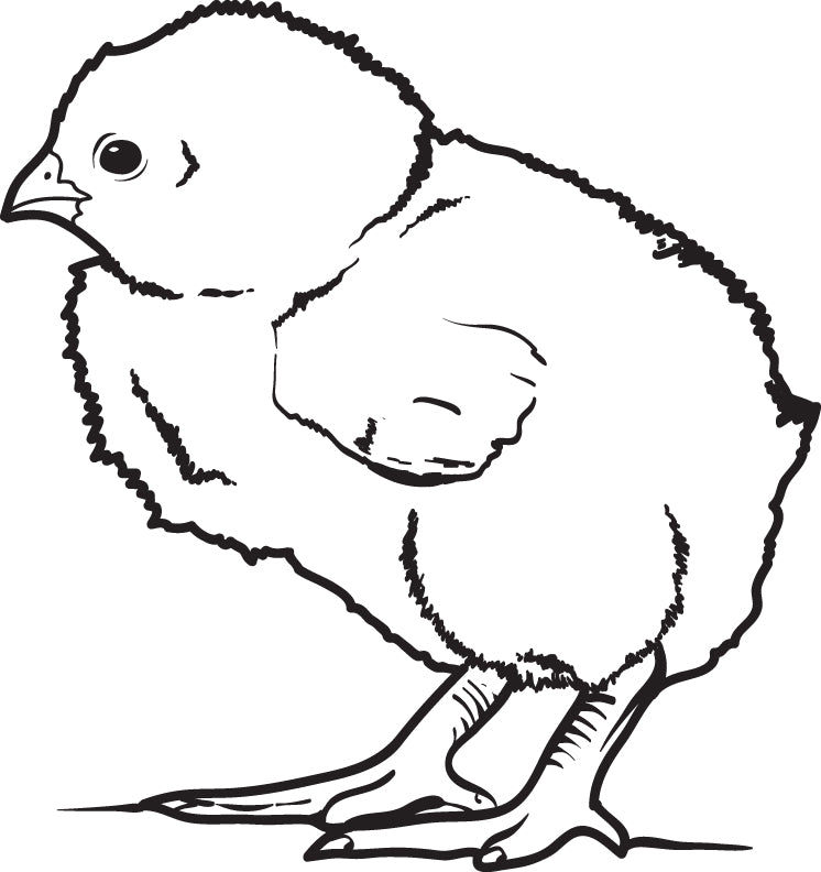 FREE Printable Little Baby Chick Coloring Page for Kids