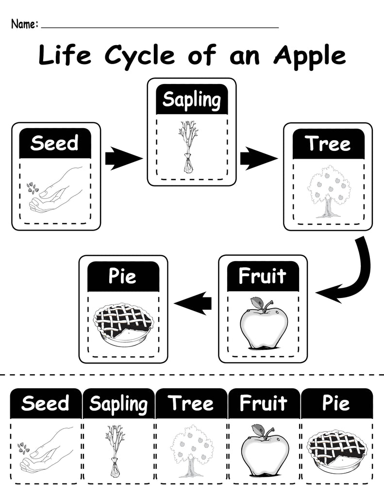 graphic relating to Free Printable Apple Worksheets named Everyday living Cycle of an Apple\
