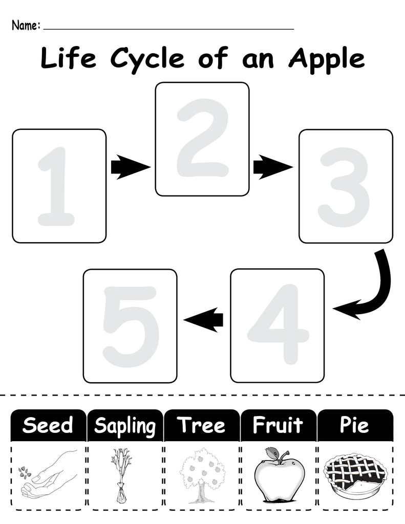 Life Cycle Of An Apple Free Printable Worksheet Supplyme