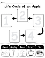 """Life Cycle of an Apple"" FREE Printable Worksheet"