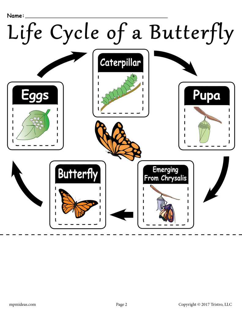 """Life Cycle of a Butterfly"" FREE Printable Worksheet"