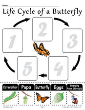 """Life Cycle of a Butterfly"" Printable Worksheet"