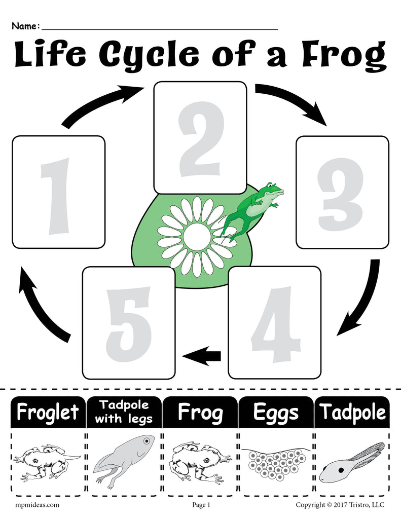 Quot Life Cycle Of A Frog Quot Free Printable Worksheet Supplyme
