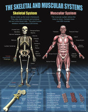 The Human Body Poster Set