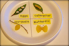 Butterfly Life Cycle...In Noodles!