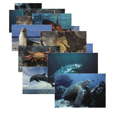 Sea Life Posters, Set of 14