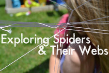 Summer Science - Spiders and Their Webs