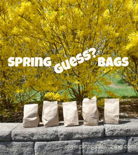 Spring Guess Bags